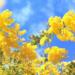 花粉症の人は注意!2月から5月に猛威を振るうモロッコの花粉