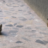 猫の狂犬病に注意!モロッコで死亡事故発生