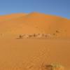 モロッコ現地発・日帰りツアー ー Karim Transport